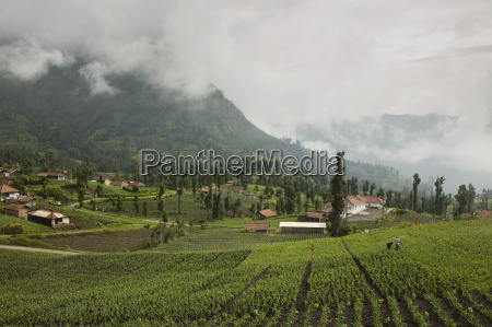 agricultural fields in a valley cemoro