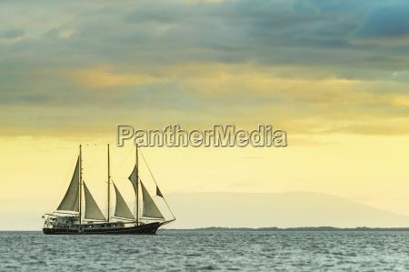 mv alta sails near isabella island
