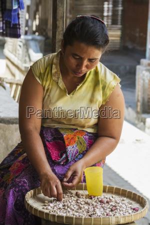 woman peeling garlic semparu lombok west