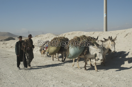 afghan men and brushwood laden donkeys