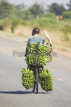 man uses bicycle to transport large