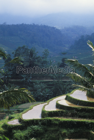 indonesia bali overview of rice terraces