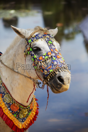 decorated horse standing outside of angkor