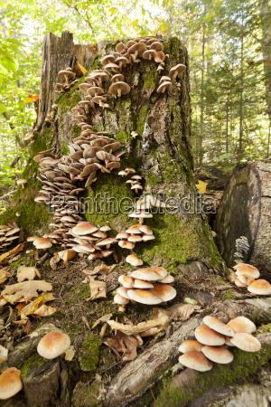 mushrooms growing on a tree stump