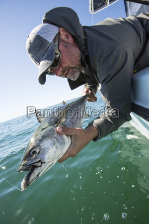 releasing a false albacore at the