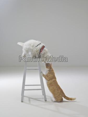 curious cat and dog santa barbara