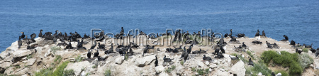 large flock of birds sitting on