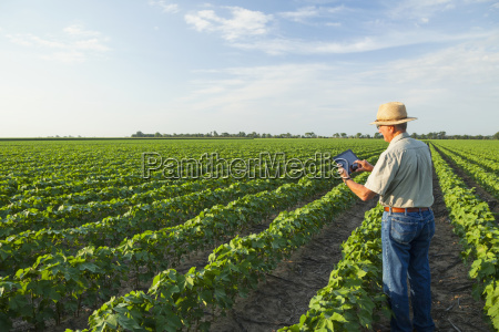 crop consultant uses tablet to make