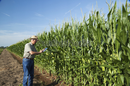 crop consultant uses tablet to record