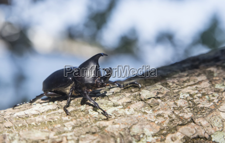 an insect on tree bark golden
