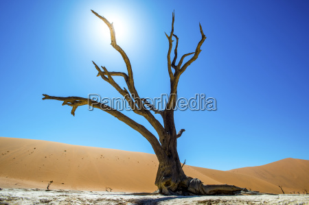 deadvlei pan and dunes estimated 900