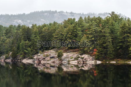 green coniferous forest on a calm