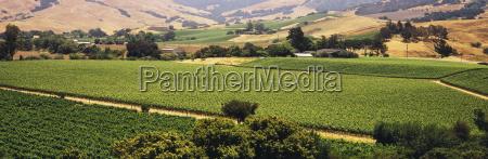 patchwork of vineyards is seen in