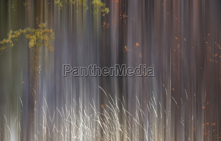 abstract trees with motion blur alberta