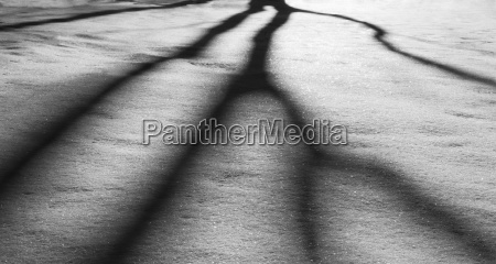harsh shadows upon the snow being