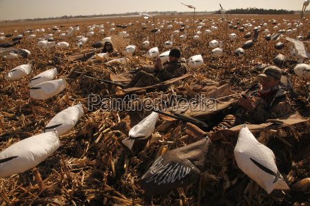 snow goose layout hunters using technology