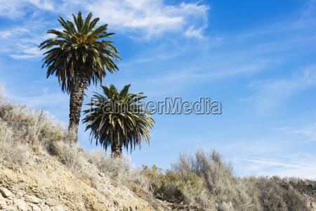 beach cliffs with palm trees near