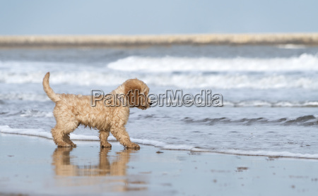 a dog stands on the beach