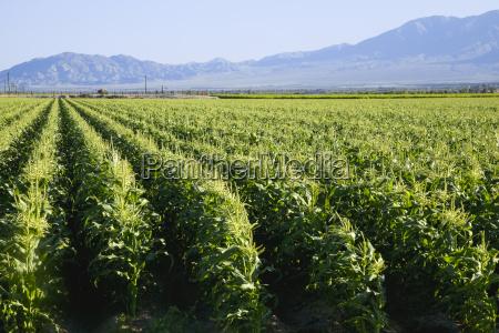 in southern californias coachella valley rows