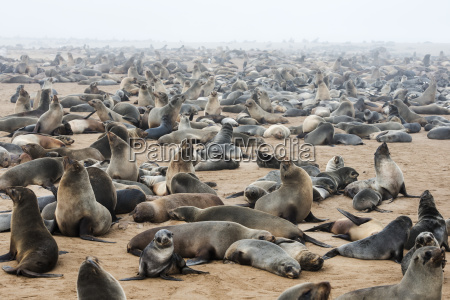 one of the largest colonies of