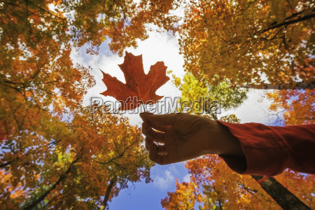woman holding a maple leaf with