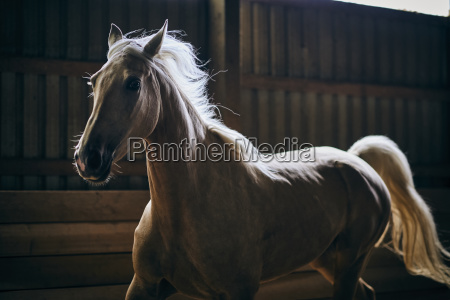 a backlit horse galloping in a
