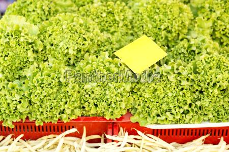 fresh lettuce leaves fruits and vegetables