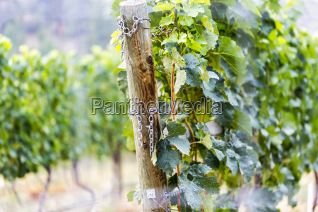 a wooden post and chains at