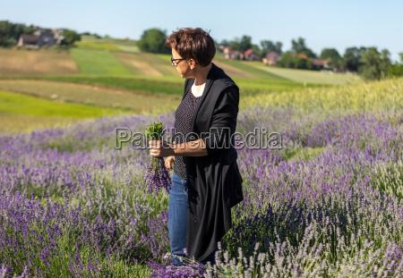 a garden full of lavender