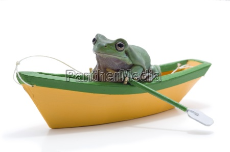 a frog in a toy boat
