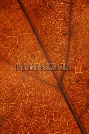 closeup of fall leaf