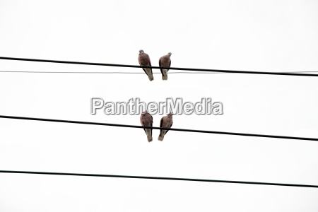 pigeons standing on power line
