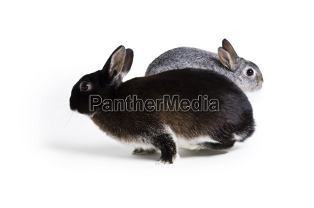 two bunny rabbits