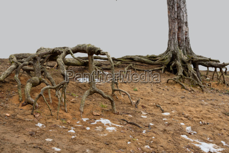 terrible roots of trees