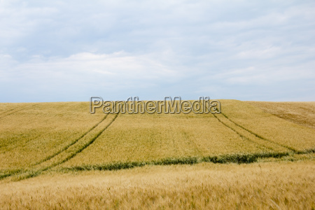 grain fields with lanes and horizon
