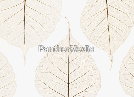arranged leaves