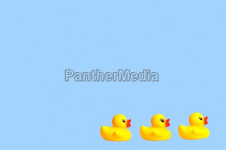 three yellow rubber ducks in a
