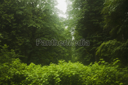 thick and vibrant green undergrowth in