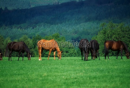 county tipperary ireland thoroughbred mares