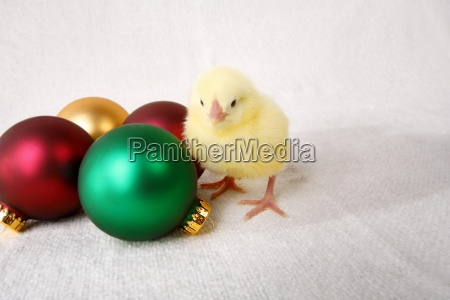 baby chick and christmas ornaments