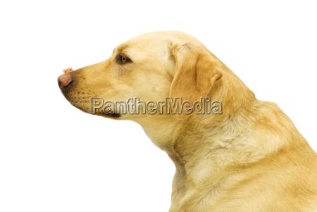 interno animale animale domestico mammifero animali