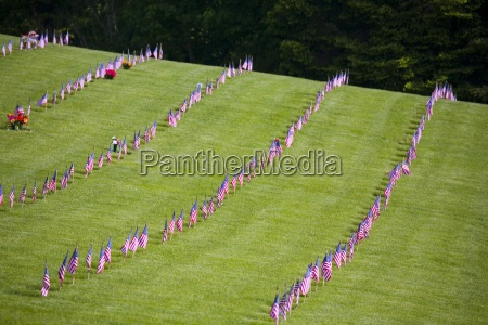 american flags in a graveyard during