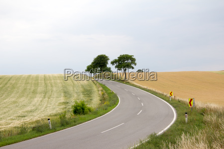 road through cornfields with trees in