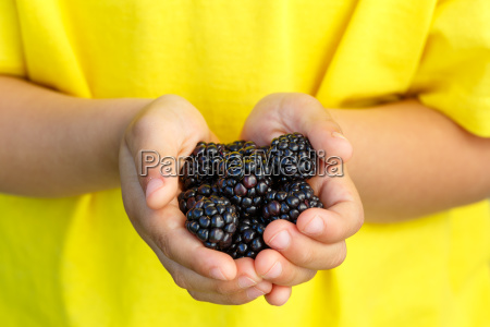 blackberry fruit berry berry blackberry fruit