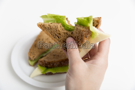 sandwich from fresh toast with cheese