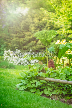 large tropical plants growing in a