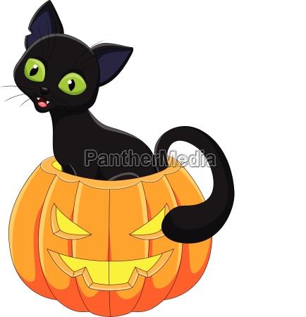 cartoon funny cat with halloween pumpkin