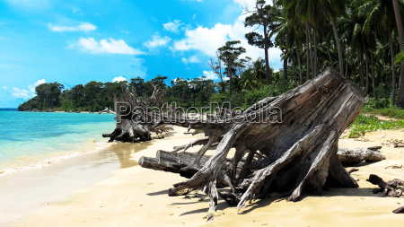 uprooted tree at wandoor beach andamans