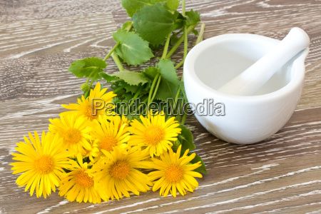 coltsfoot with mortar and pestle