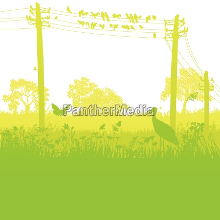 birds on the telegraph poles in